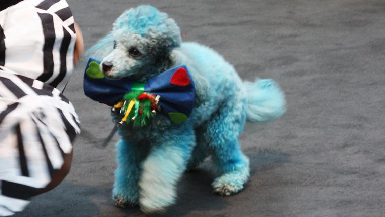 individueller-Hund auf der Fashion Week Berlin